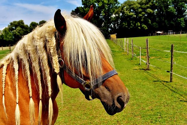 hříva koně