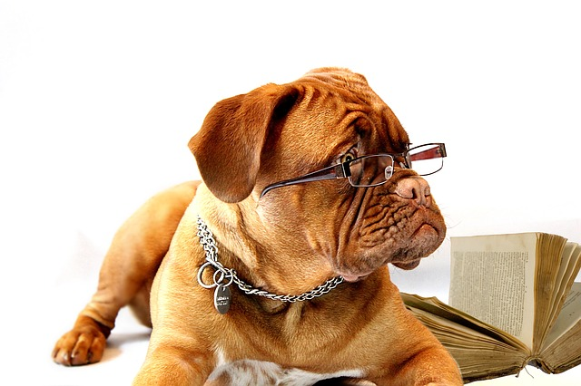 pes s brýlemi